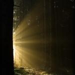 fotografia_przyrodnicza_3