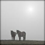 Mgły_3
