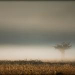 Mgły_7