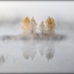 Fogs  / Mgły