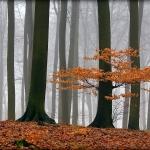 fotografia krajobrazu_4