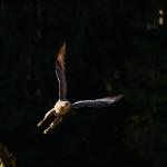ptaki_15