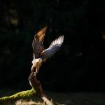 ptaki_17