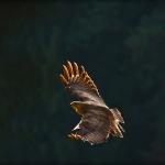 ptaki_19