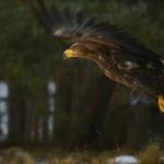 ptaki_2
