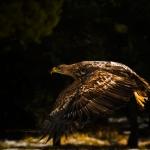 ptaki_5